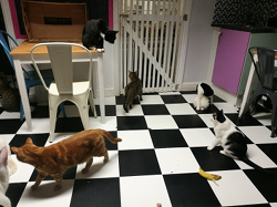 Many cats waiting for dinner!