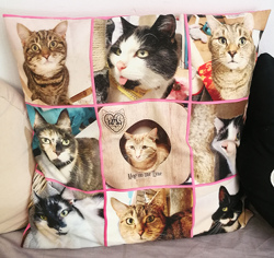 A cushion with some of the cafe cats printed on it